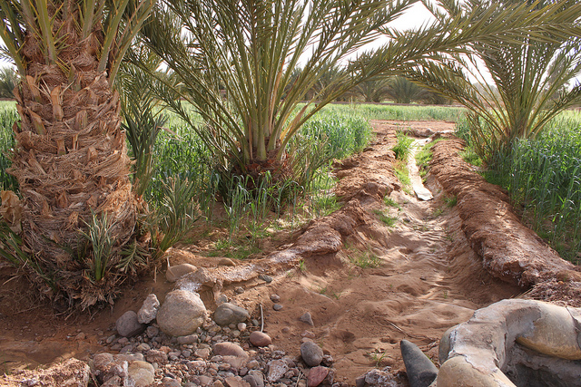 Is Morocco leading on the path toward pro-environment development?