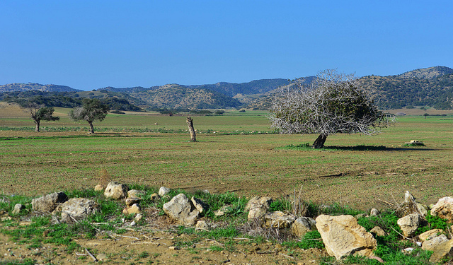 Cyprus: the green economy shows the way forward