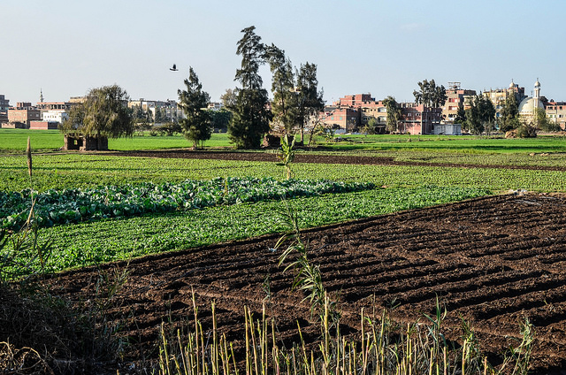 Electronic smart cards for Egypt's farmers