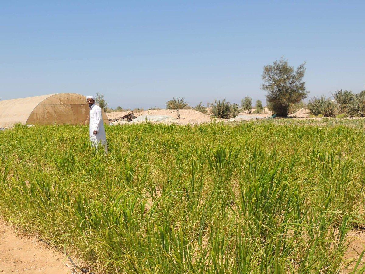 Organic farming in Egypt