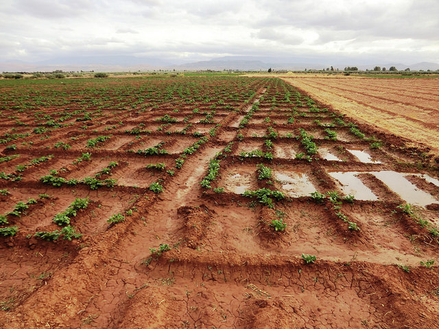 A sustainable water supply for Morocco's farmers bears fruit