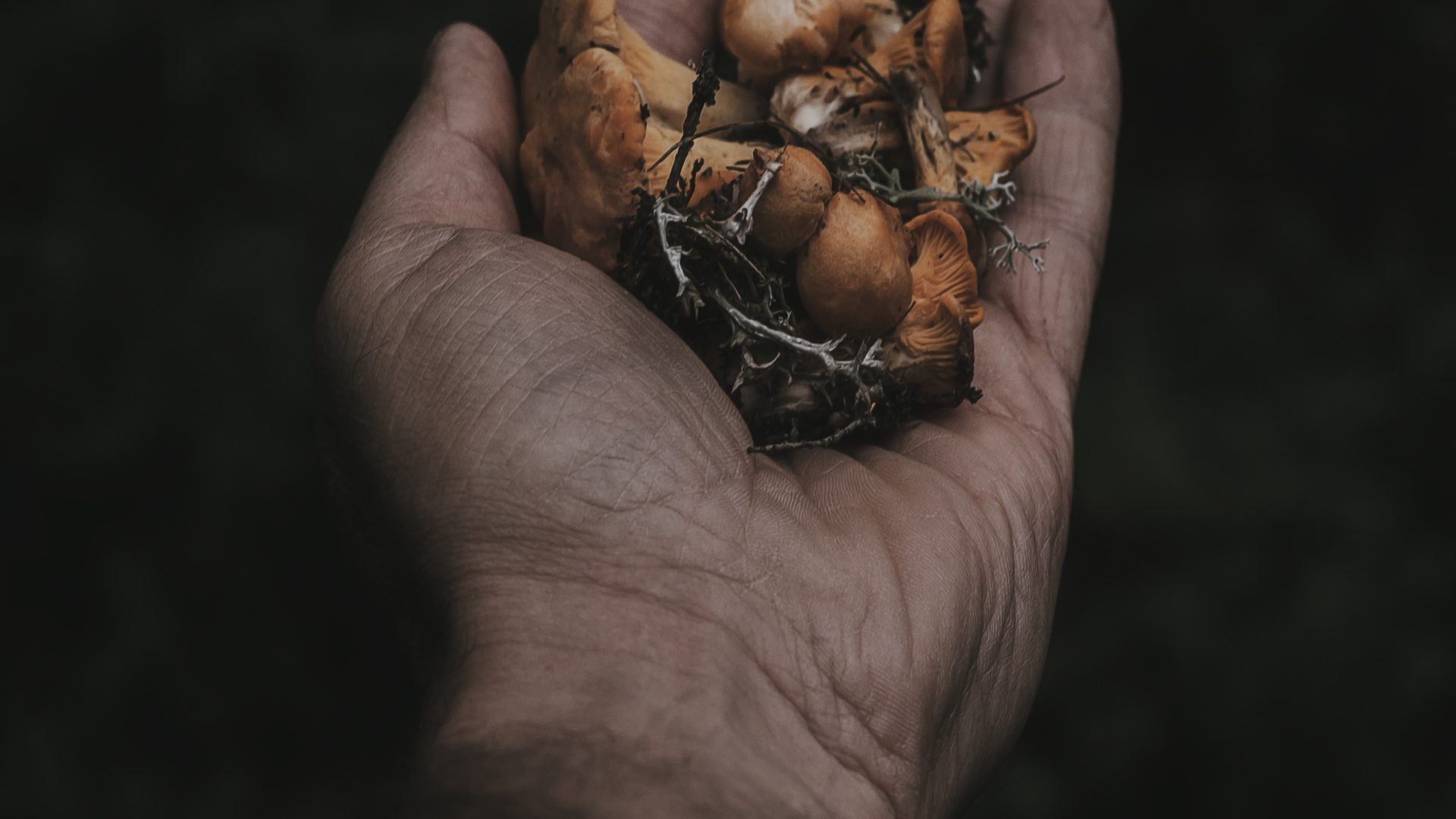 A Lebanese business is scaling up organic mushroom production while counteracting land scarcity