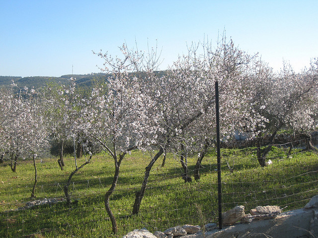 The spread of ecological agriculture in Palestine
