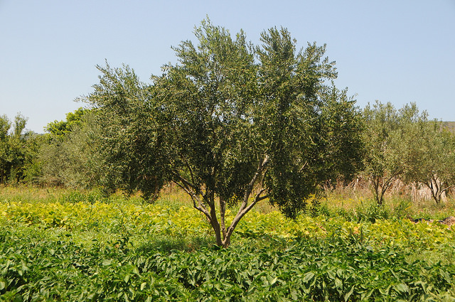 Forum on Agriculture, Rural Development and Migration in the Mediterranean