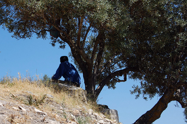 Tunisia: land of the olive tree