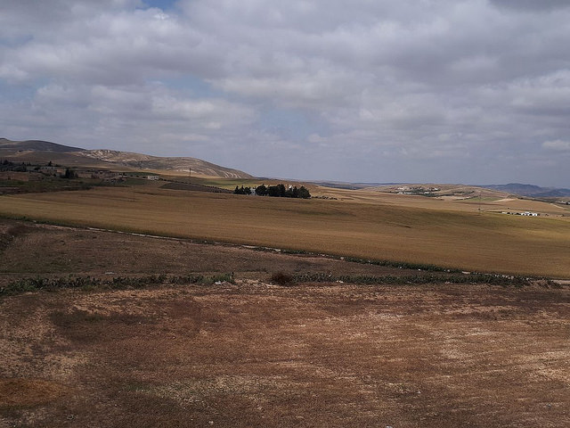 Soil and water conservation techniques in the semiarid region of Sidi Bouzid (Central Tunisia)