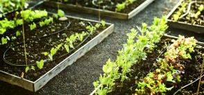 Urban agriculture as an instrument for integration: meet GAPS initiatives