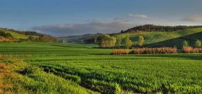 European policy perspectives on data-intensive agriculture & food