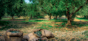 Fixing food: the Mediterranean region