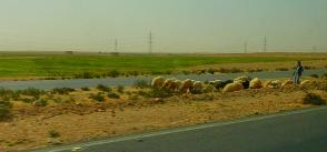 Egypt, FAO dig 99 wells to face water shortage in Matrouh