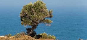 Water-Energy-Food-Ecosystem Nexus in the Mediterranean