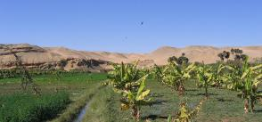 Coping with climate change: what will it take for MENA's smallholders