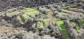 Increasing water and land productivities in Tunisia and Morocco