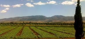 Supplemental irrigation for improved water use efficiency