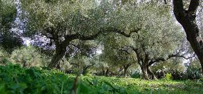 Tunisia Second Among Africa's Organic Exporters