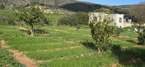 Areas dedicated to organic farming in Sidi Bouzid governorate increase