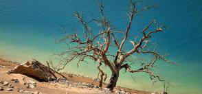 Climate change: Mediterranean ecosystems will change to a state unprecedented in the past