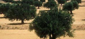 New measures expected to incentivise investment and grow Tunisia's agricultural sector