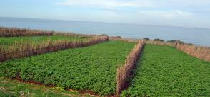 Modernisation of Algerian agriculture to help achieve food security