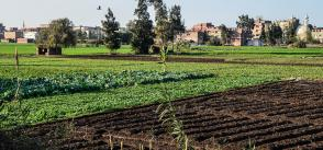 Egypt's organic products mainly for export, not local market