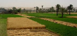 Renewable energy production boosts hope for job creation in Egypt