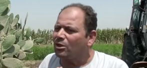 UN project in Egypt helps farmers improve food security