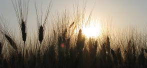 ICTs for family farming in the NENA region | survey