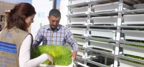 Growing Food in the Algerian Desert