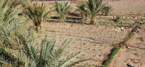 How Morocco became Africa's agricultural oasis