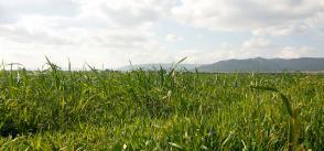 Shaking up salt-friendly agriculture