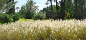 GCF project seed funding to help grow agricultural resilience in Morocco
