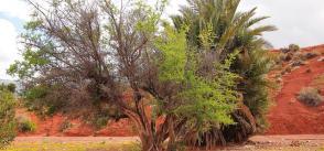 Brachoua: the winning bet of permaculture