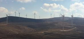 Assessment identifies steps to mitigate wind farms' risks to wildlife