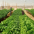 Farming without soil seen as solution in land without water