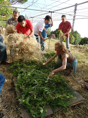 Permaculture in Lebanon | SOILS Association